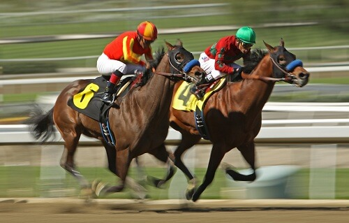 Canada horse racing betting tennis betting odds