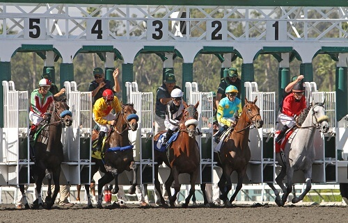 breeders cup betting odds