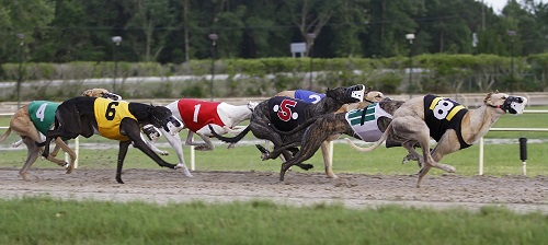 Dog Race Betting in Canada