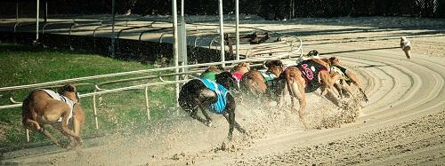 Online Greyhound Betting Sites Canada